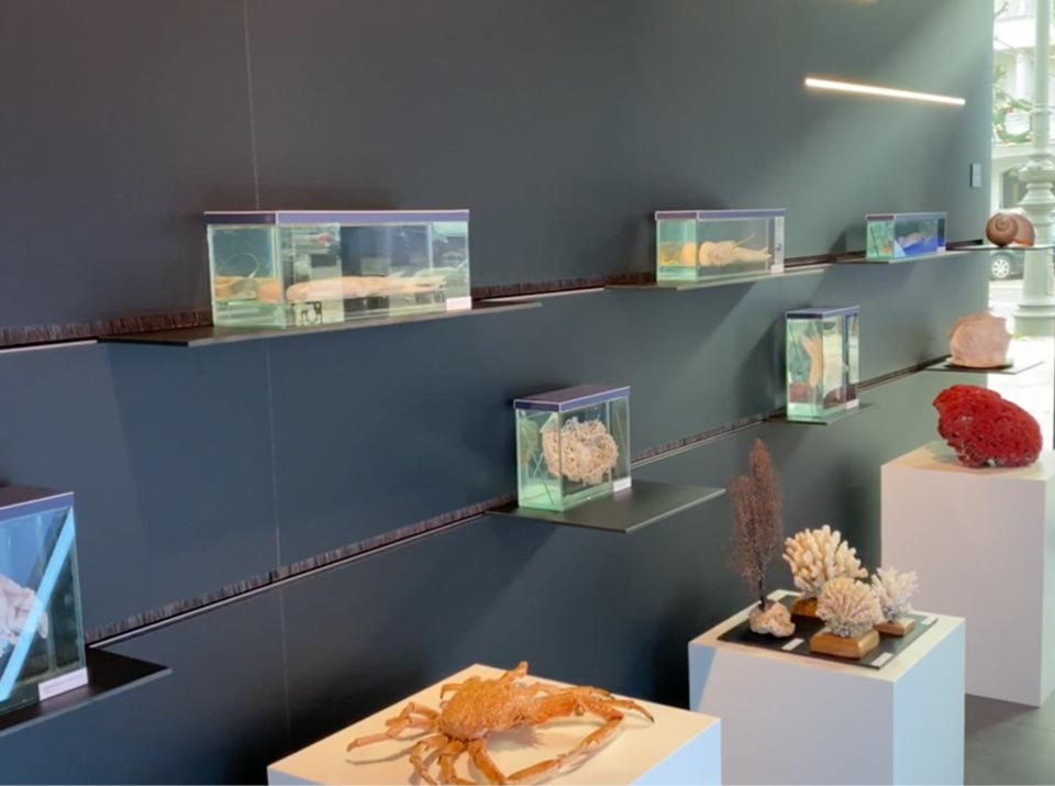 Ozeaneum exhibits on shelves